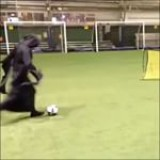 Insane skills from the Grim Reaper last night ???????? #halloween #skills ??www.soccertrials.com?? . Credit: @gps_soccerassassins . •Want to be coached by the best? • ???? Double tap & Tag your friends! . . #futbol#soccer#skills#goals#golazo#skillshow#soccerskills#messi#cr7#neymar#pogba#suarez#likes#instagram #trials#soccertrials #afc #skills #inspiration#motivation #football #barcelona #barca #realmadrid #freekick #challenge #fifa17 #win
